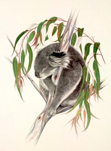 Australian Wildlife Print - Koala