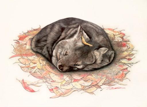 Australian Wildlife Print - Wombat