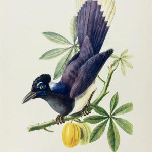 Vintage Tropical Birds